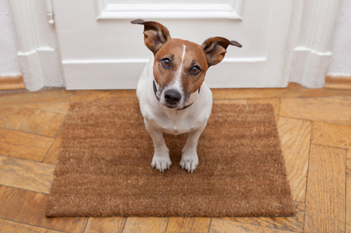 Cagnolino che aspetta alla porta di casa seduto su un tappeto